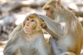 美控中閉關鎖猴 疫情燒出戰略猴儲備危機