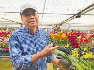抗疫求生 台南蘭農搶攻香莢蘭市場