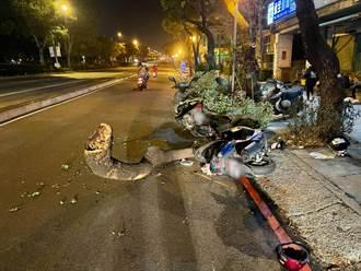 白蟻惹禍?台灣大道行道樹無風無雨突倒地 兩騎士撞擊受傷