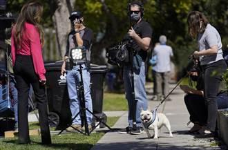 女神卡卡2隻法鬥遭擄 懸賞50萬美元找愛犬
