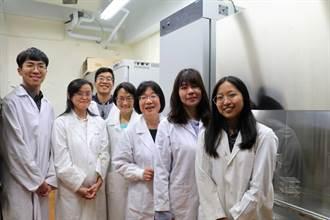 修復「菜瓜布肺」有望! 陽明交大研發臍帶間質幹細胞療法 將在台臨床試驗