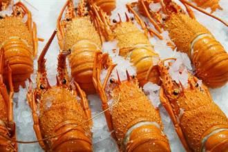 中澳鬧翻 龍蝦跳樓價還滯銷 2.3萬公升葡萄酒因它被扣押