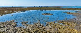 藻礁公投連署告急 還差22萬份