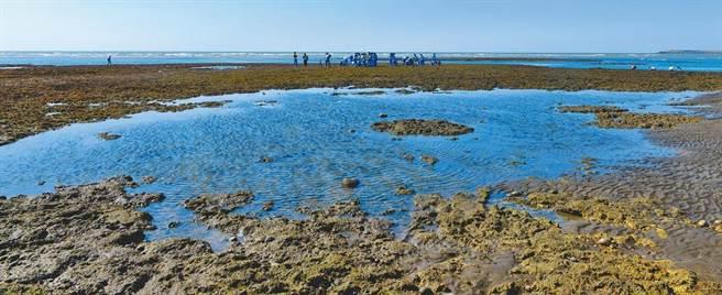 圖為桃園藻礁保護區。(桃園市環保局提供)