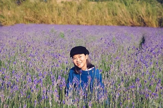 賞花遊秘境_西湖薰衣草(圖片旅遊經提供)