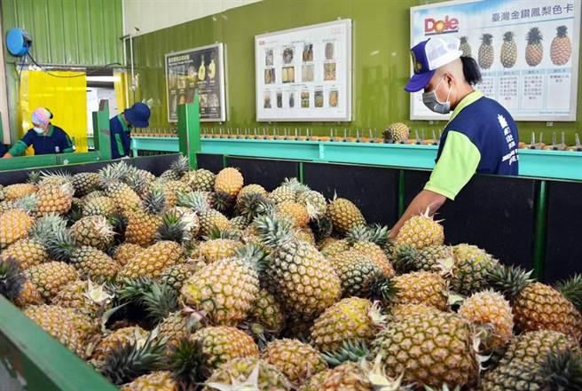 大陸暫停台灣鳳梨進口。(林和生攝)