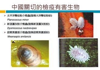 檢出介殼蟲 去年多次遭退運