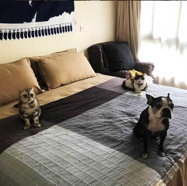 過去鍾瑶的床總是被一狗二貓占據,但愛犬「安咕」去年3月已因病過世。(圖/翻攝自鍾瑶IG)