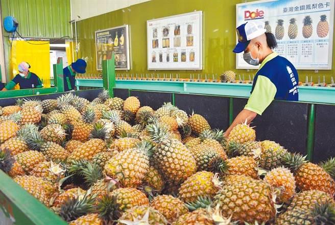 中國大陸海關總署因台灣鳳梨檢出介殼蟲,宣布自3月1日起暫停台灣鳳梨輸入。(林和生攝)
