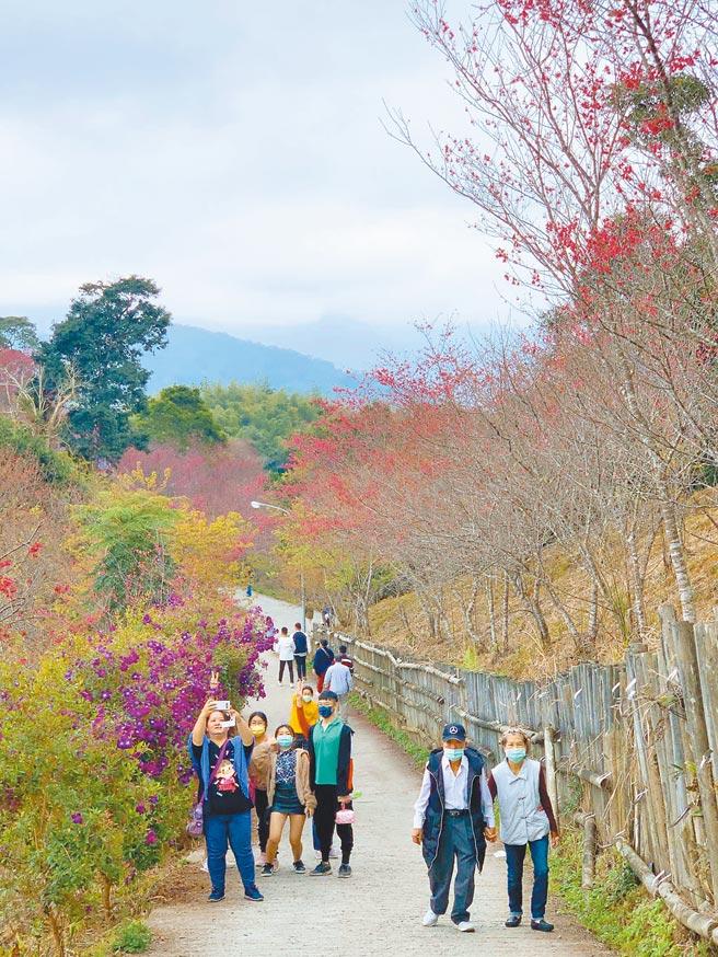 高市寶山櫻花公園盛開,花期約到3月上旬,連假期間可望吸引民眾造訪。(柯宗緯攝)