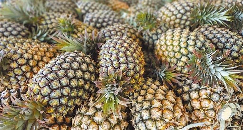 資深媒體人黃創夏認為,台灣每人平均吃掉18公斤鳳梨,就能挺過大陸禁令的衝擊,但資深媒體人謝寒冰卻指出,任務完成後可能會有好幾百萬人見上帝。(圖/本報資料照)