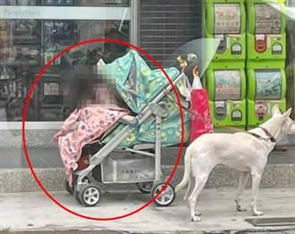 家長超商購物 獨留小白狗綁嬰兒車店外顧娃 網友戰翻