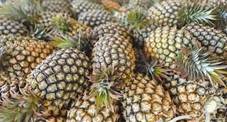 台灣每人吞18公斤鳳梨就能挺過去? 名嘴傻眼:恐有百萬人見上帝