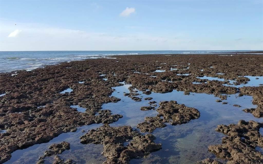 環保團體極力呼籲保育大潭藻礁。(資料照/摘自珍愛桃園藻礁網站)
