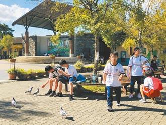 鴿滿為患 大台北市區也淪陷