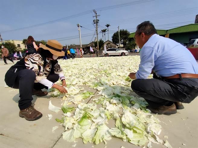 民眾在社區廣場曝曬高麗菜。(吳建輝攝)