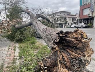 台東颳9級陣風 路樹倒塌壓到車輛