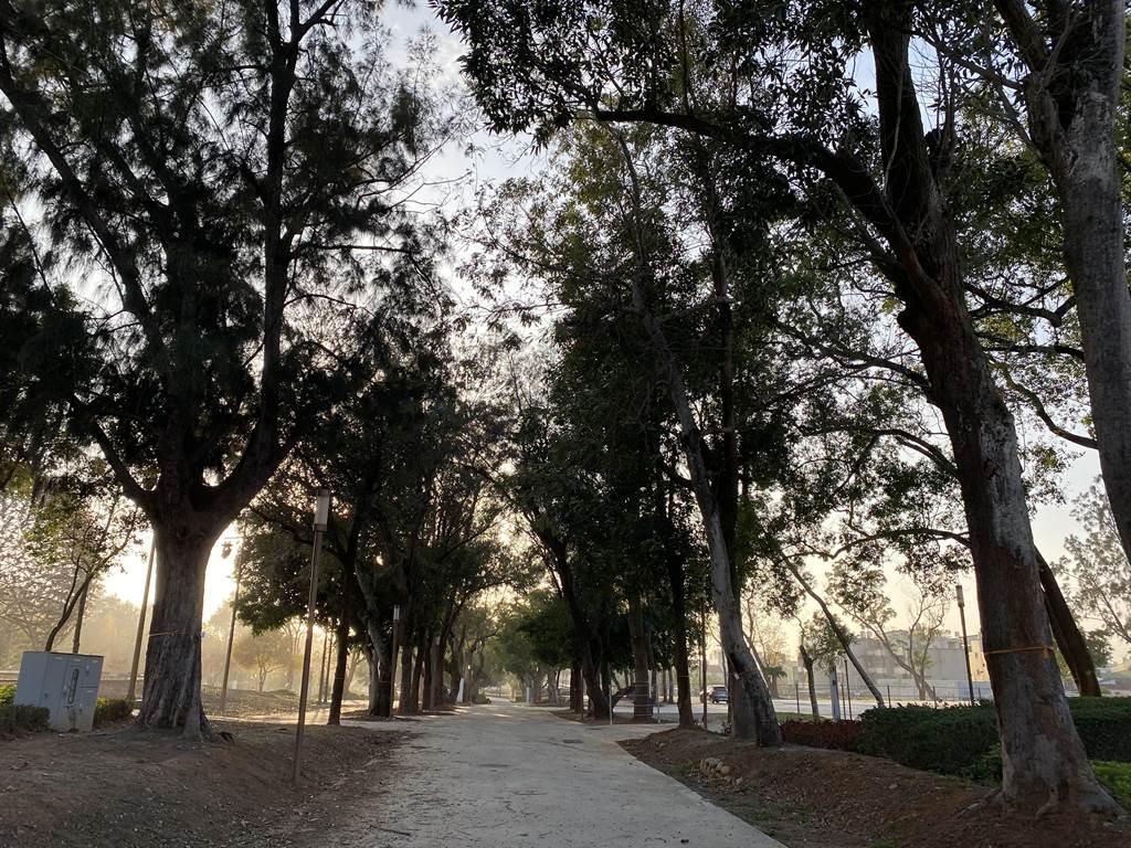 台中花博后里森林園區原地保留1500多棵參天大樹,形成都市之肺。(王文吉攝)