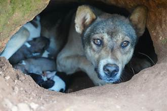 母狗突躲進地洞主人好困惑 盲摸抱出14個驚喜嚇傻