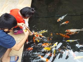 社區魚池成自家魚缸 小孩餵養遭警衛斥:會餵死住戶的魚