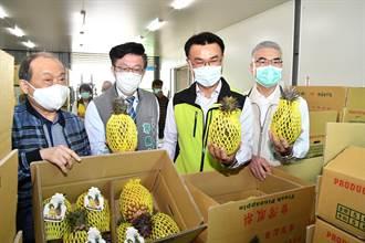 鳳梨狂漲近5成民眾驚呆 台南綠委脫口爆出大猛料