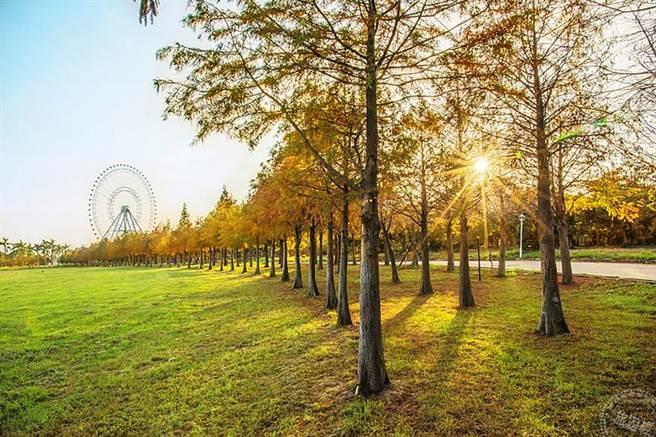 台中麗寶樂園4月推2021熱氣球夢想節_落羽松大草原。(旅遊經提供)