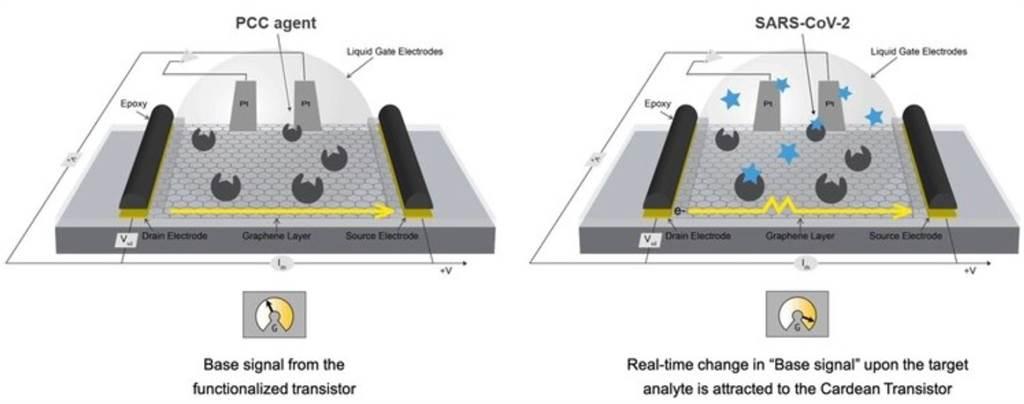 「病毒偵檢器」的原理,底部是一片石墨烯濾網,其上有「蛋白質催化補獲試劑」(PCC agents),一但有新冠病毒與這些試劑接觸,引發的電流變化就能判斷環境中的病毒濃度。(圖/美國陸軍)