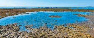 為藻礁做過什麼?桃市府回擊 孫大千秀證據打臉:信念不曾改變