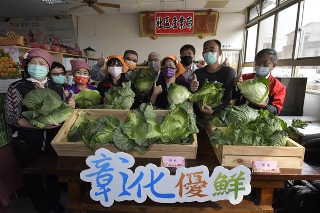 彰化高麗菜是全台第4大產區,今年盛產價格低廉,彰化縣長王惠美指示相挺農民,縣府已經採購11公噸的高麗菜,分送給縣內282個社區關懷據點。(吳建輝攝)