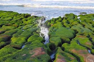 限定美景 老梅綠石槽又開始重鋪綠地毯了
