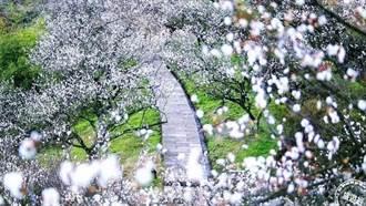 美丽中华春季赏花去 户外踏青景点必游推荐