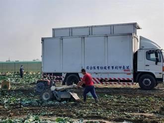 印刷厂物流车每天下田载高丽菜 健豪印刷厂买5000箱送客户