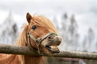母馬過度交配身體出現驚人變化 竟被誤認為母牛