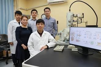 仿生材料也能有生物特徵 興大研究登國際期刊