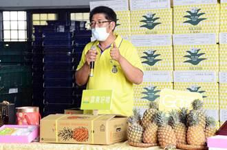 貿易商刻意壓低收購價 鳳梨農堅持不賤價出售