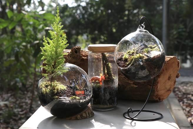 嘉義大學今年森林周活動展出新品微景觀生態瓶。(嘉義大學提供)