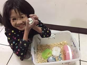 12歲小女孩手作倉鼠小屋 為失親12歲女孩圓夢