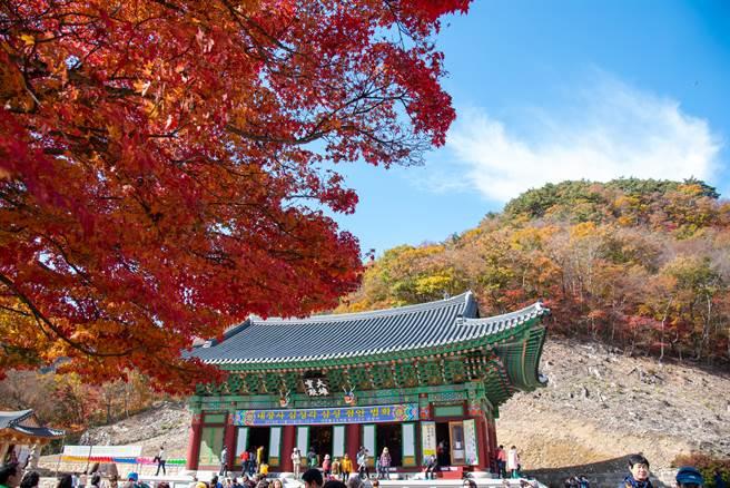 內藏寺慘遭祝融,大雄寶殿付之一炬。(圖/Shutterstock)