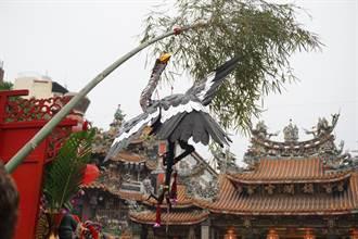 鎮瀾宮祈雨祭典突刮怪風 「知雨之鳥」墜地信眾驚呼