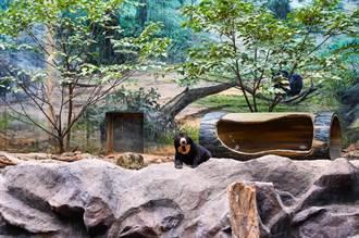遊客轟新竹動物園超小、動物沒精神 網打臉:沒做功課