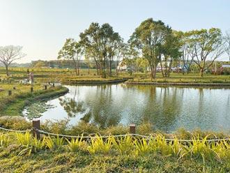 八甲茶園蓄水池 賞景好去處