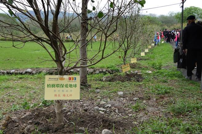 竹東河濱公園植樹環保愛地球活動共種植380棵桂花樹,張順朋相信很快就能成為飄著桂花香的桂花林園步道。(羅浚濱攝)