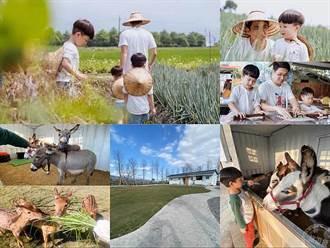 宜蘭農場旅遊新亮點 三星蔥農、梅花鹿、迷你驢體驗一次滿足
