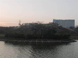 南科生態環境營造有成 迎曦湖成白鷺鷥的家