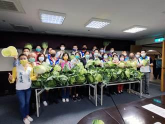 力挺菜農度難關 南市議會各議員服務處明起同步贈高麗菜