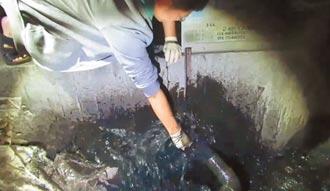 彰化畜牧场偷排废 脏臭超标30倍