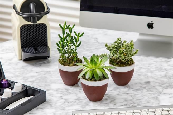 S Hotel防疫2.0住房專案,讓入住房客體驗療癒的綠色植栽15天培養計畫。(S Hotel提供)