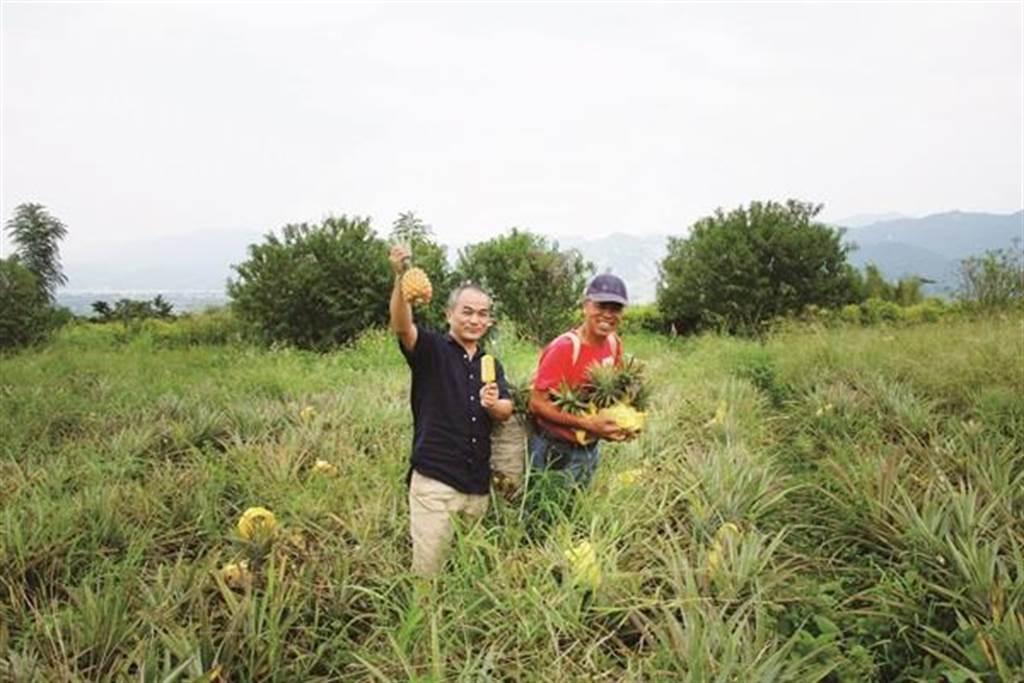 台灣鳳梨自每年3月起進入產季,一路採收到7月。(春一枝提供)