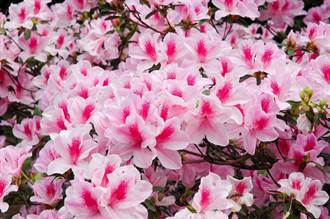 連台北人都不太知道的賞花秘境 重點還免門票