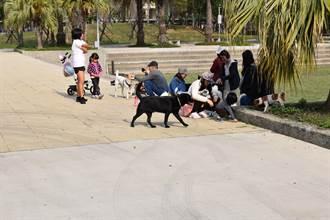毛小孩、喵星人有福了 頭份市公所3月底開始免費施打狂犬疫苗